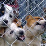 Psi v klietke