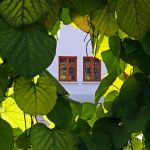 Pohľad na dve okná spoza stromu